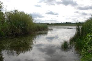 Der Rossweiher in der Umgebung des Klosters Maulbronn ist ein europaweit geschütztes Flora- und Fauna-Habitat