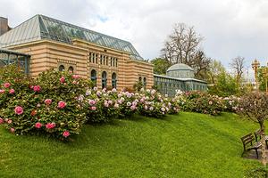 Das Maurische Landhaus in der Wilhelma, eingerahmt von historischen Pfingstrosen (Foto: Wilhelma Stuttgart, Harald Knitter)