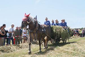 Pferdegespann beim Feldtag