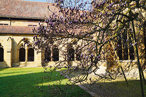 Malerisches Motiv: Magnolienblüte im Innenhof des Klosters Maulbronn (Foto: SSG)