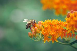 Mit dem Volksbegehren Artenschutz wollen die Antragsteller den Lebensraum für Bienen erhalten. Foto: dpa/imagebroker
